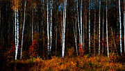 Forest Light Photos - Colors of Fall by Jenny Rainbow