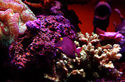 Bruster Photos - Colors of Underwater Life by Clayton Bruster