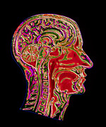 Sca Prints - Coloured Ct Scan Of A Head Showing A Healthy Brain Print by Pasieka