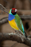 Prakash Pixs - Colourful Bird