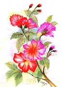 Blessings Drawings - Colourful Flowers by Xafira Mendonsa