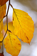 Autumn Leaf Prints - Colours of Autumn Print by Angela Doelling AD DESIGN Photo and PhotoArt