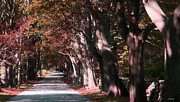 Fall Photographs Prints - Colt Park Print by Tom Prendergast
