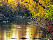 Mississippi River Scene Posters - Columbia Bottoms Slough II Poster by Greg Matchick