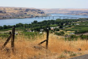 Barbed Wire Fences Photo Prints - Columbia River - Biggs and Maryhill State Park Print by Carol Groenen
