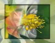Abstract Columbine Prints - Columbine Burst Print by Chuck Brittenham