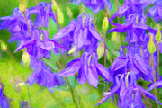 Abstract Columbine Prints - Columbine Print by Verena Matthew