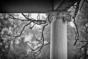Column In Spring Print by Susan Isakson