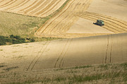 Cultivation Prints - Combine Harvester in Golden Fields Print by Iain Sarjeant