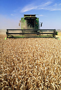 Combine Photos - Combine Harvester Working In A Wheat Field by Jeremy Walker