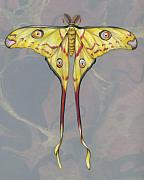 Insects Mixed Media Metal Prints - Comet Moth Metal Print by Mindy Lighthipe