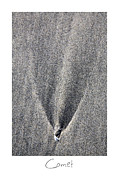 Beach Art Posters - Comet Poster by Peter Tellone
