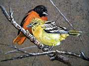 Baltimore Orioles Framed Prints - Comforting Framed Print by Stan White