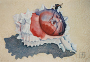 Seashell Art Prints - Coming Out of Her Shell Print by Eve Riser Roberts