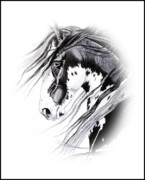 Wild Horses Drawings - Commanche by Cheryl Poland