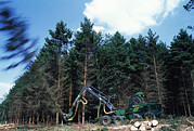Sawing Framed Prints - Commercial Forestry Framed Print by Jeremy Walker