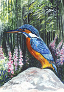 Kingfisher Drawings Framed Prints - Common Kingfisher  Framed Print by Carol Wisniewski