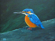 Kingfisher Drawings Framed Prints - Common Kingfisher Framed Print by Tina McCurdy
