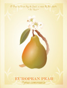 Carrieann Reda Posters - Common Pear Poster by CarrieAnn Reda