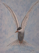 Heather Perez Metal Prints - Common Tern in Flight Metal Print by Heather Perez