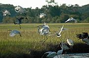 Atlantic Coastal Birds Metal Prints - Community Uplift Metal Print by Bruce Gourley