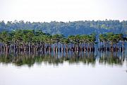 Florida Panhandle Photo Prints - Compass Lake Print by Peter  McIntosh