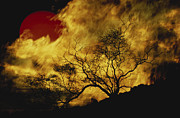 Bare Trees Metal Prints - Composite Of A Lone Tree, Burning Fire Metal Print by Stocktrek Images