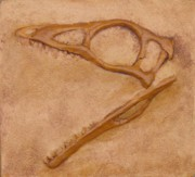 Extinct And Mythical Reliefs - Compsognathus Skull by Alex Nelson