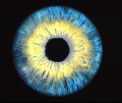 Round Shape Prints - Computer-enhanced Blue/yellow Iris Of The Eye Print by David Parker