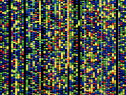 Helix Framed Prints - Computer Screen Showing A Human Genetic Sequence Framed Print by David Parker