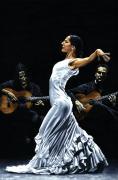 Concentracion Del Funcionamiento Del Flamenco Print by Richard Young