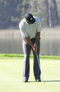 Tiger Woods Photos - Concentration  by Chuck Kuhn