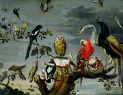 Animal Painting Prints - Concert of Birds Print by Frans Snijders