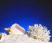 Conch Photos - Conch Shell, Coral And Starfish Lying In Sand by Victor Habbick Visions