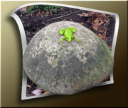 Sfx Photo Prints - Concrete Toad Stool Print by Brian Wallace