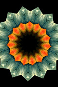 Kaleidoscope Photos - Condor by Mark Gilman