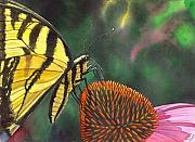 Swallowtail Prints - Cone Flower Print by Catherine G McElroy