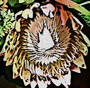 Photomanipulation Prints - Cone Flower Print by Mindy Newman