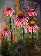 Barbara Barry-Nishanian - Cone Flowers