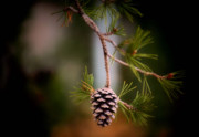 Winter Wedding Flowers Photos - Cone of Silence by Karen M Scovill
