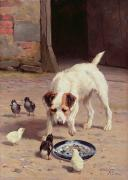 Pets Paintings - Confrontation by Alfred Duke