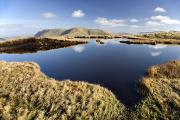 The Natural World Prints - Connemara, Co Galway, Ireland Bog Pool Print by Gareth McCormack