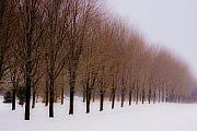 Winter Trees Photo Originals - Connolly Trees by Don Nieman