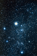 Auriga Prints - Constellation Auriga With Halo Effect Print by John Sanford