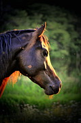 Horse Portraits Prints - Contemplate Print by Emily Stauring