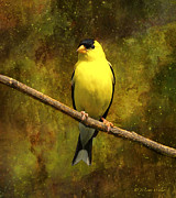 Masked Digital Art Prints - Contemplating Goldfinch Print by J Larry Walker