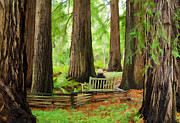 Contemplation Among The Trees Print by Don Schwartz