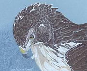 Red-tailed Hawk Paintings - Contemplation by Anita Putman