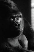 Scott Hovind - Contemplation