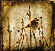 Perched Mixed Media Posters - Content Poster by Trudy Wilkerson